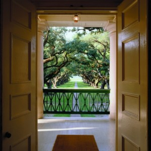 Oak canopy as seen from the open door of the mansion
