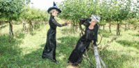 Halloween 2018 Caption This! Photo Contest banner - 2 classy witches in the apple orchard